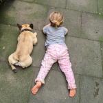 Ein Leben ohne Hund?
