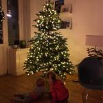 Make a wish – der Weihnachtsbaum ist da